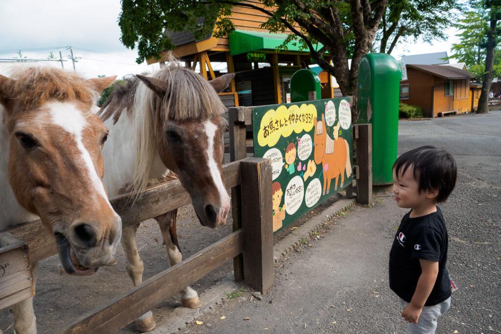 まかいの牧場 馬と触れ合い